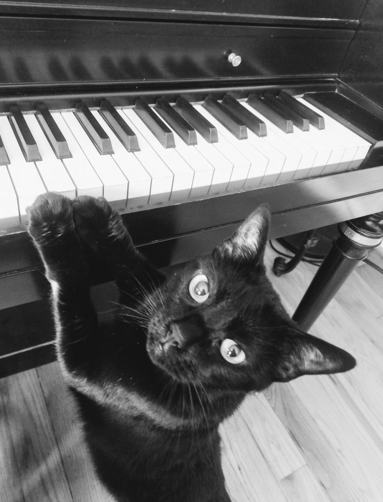 black cat playing the piano